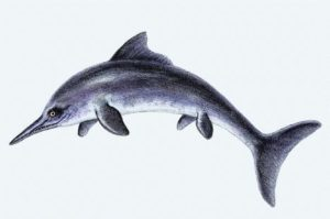 Dolphin Extinction Is Possible - Ancient Dolphin-like Ichthyosaurs Wiped Out Once Before_0